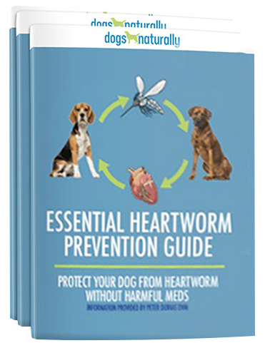 Why I Don't Give My Dog Heartworm Meds (And Why You Shouldn't Either)